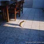 Random image: 2002/07/27 - Meerkat