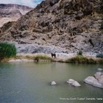 Random image: 2002/08/14 - A Horse in Fish River Canyon
