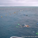 Random image: 2007/06/19 - Snorkelling the Great Barrier Reef