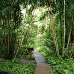 Random image: 2007/06/20 - Cairns Rainforest Boardwalk