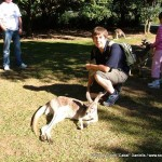 Random image: 2007/06/22 - Kangaroo