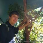 Random image: 2007/06/22 - Koala