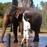 Random image: 2007/06/22 - Elephant Wash