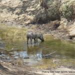 Random image: 2009/08/23 - Warthog