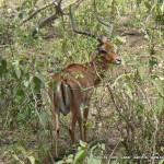 Random image: 2009/08/23 - Impala