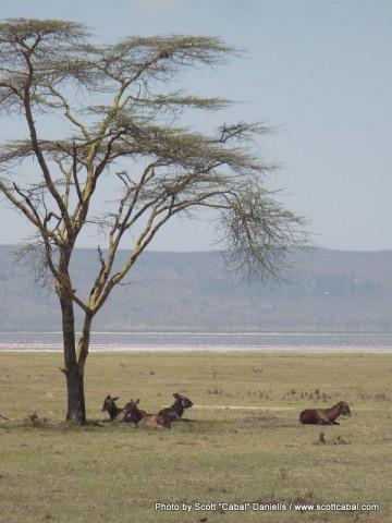 Nakuru NP