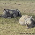 Random image: 2009/08/23 - Rhino