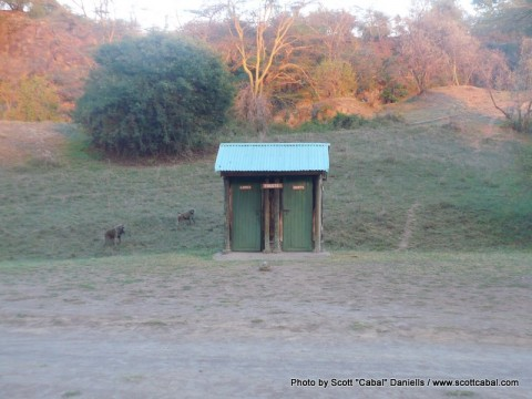 Baboons guarding the toilet