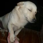 Random image: 2009/08/24 - Dogs