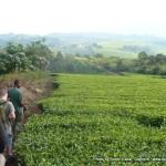 Random image: 2009/08/27 - Tea Walk