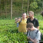 Random image: 2009/08/27 - Tea Plantation