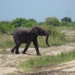 Random image: 2009/08/28 - Young Bull Elephant