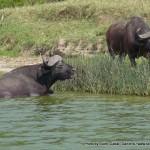 Random image: 2009/08/28 - Loser / Reject Buffalo