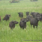 Random image: 2009/08/29 - Buffalo