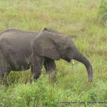 Random image: 2009/08/29 - Baby Elephant