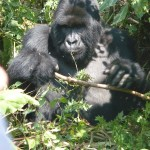 Random image: 2009/08/31 - First Gorilla photo