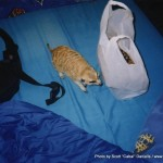 Random image: 2002/08/22 - Meerkat visiting us