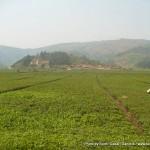 Random image: 2009/09/02 - Rwandan Plantations