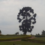 Random image: 2009/09/02 - Weird tree