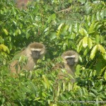 Random image: 2009/09/04 - More Monkeys