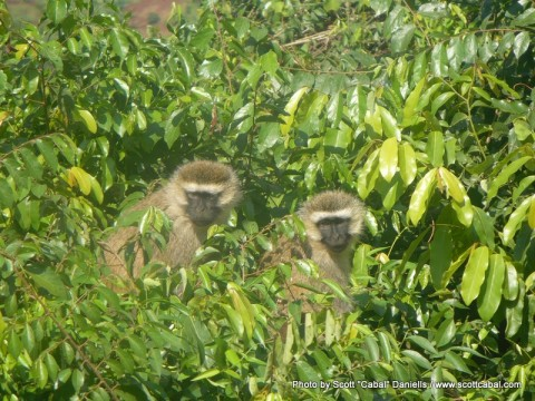 More of the Monkeys