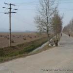 Random image: 2010/10/14 - North Korean fields