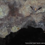 Random image: 2012/02/06 - Bats