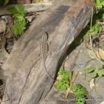 Random image: 2012/02/07 - Lizard