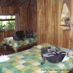Random image: 2012/02/09 - Historias Lodge
