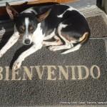 Random image: 2012/02/11 - Luco the dog!