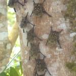Random image: 2012/02/12 - Bats