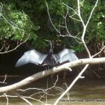 Random image: 2012/02/12 - A Costa Rican bird