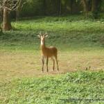 Random image: 2012/02/29 - Uganda Kob