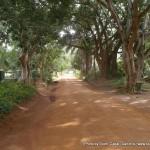 Random image: 2012/02/29 - Entebbe zoo