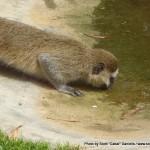 Random image: 2012/02/29 - A Monkey drinking