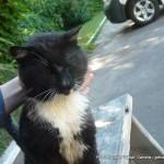 Random image: 2013/06/20 - Chernobyl Cat