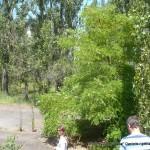 Random image: 2013/06/20 - Pripyat Stadium