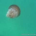 Random image: 2014/03/04 - Jellyfish