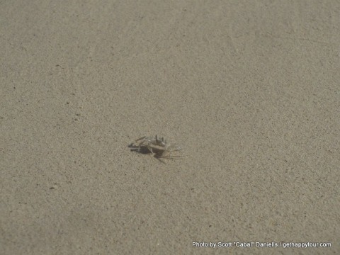 A tiny crab