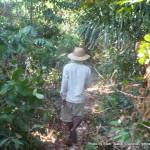 Random image: 2014/03/04 - Jungle walk