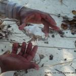Random image: 2014/03/04 - Hermit Crab