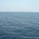 Random image: 2014/03/07 - Pilot Whales