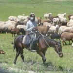 Random image: 2015/05/29 - Kyrgyz rider