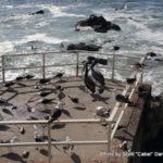 Random image: 2016/01/25 - Sea birds